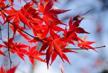 Bilde høstblader